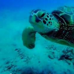BT Letting Go Turtle